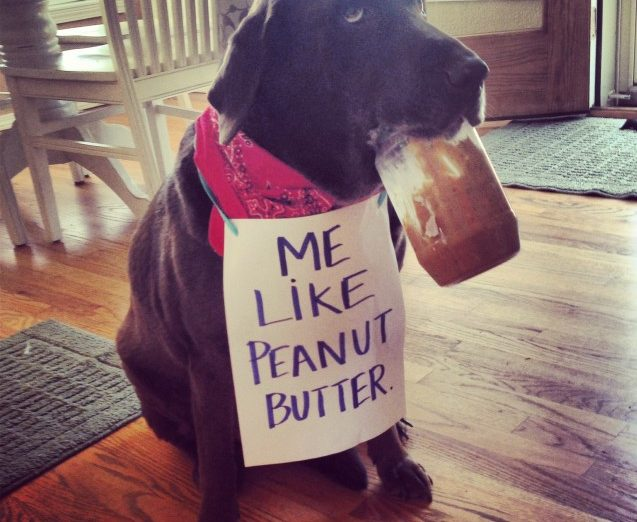 dogshaming-PB-637x637