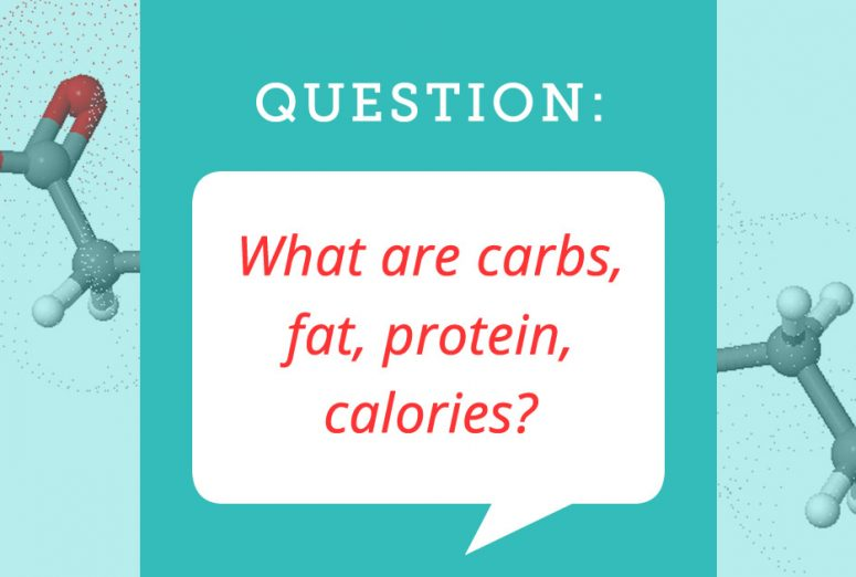 What are carbs, fat, protein, and calories?